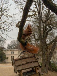 Esquilo no Parque Lazienki