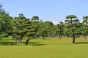 O Japão é um dos mais famosos destinos de Primavera, conhecido pelos festivais das cerejeiras em flor