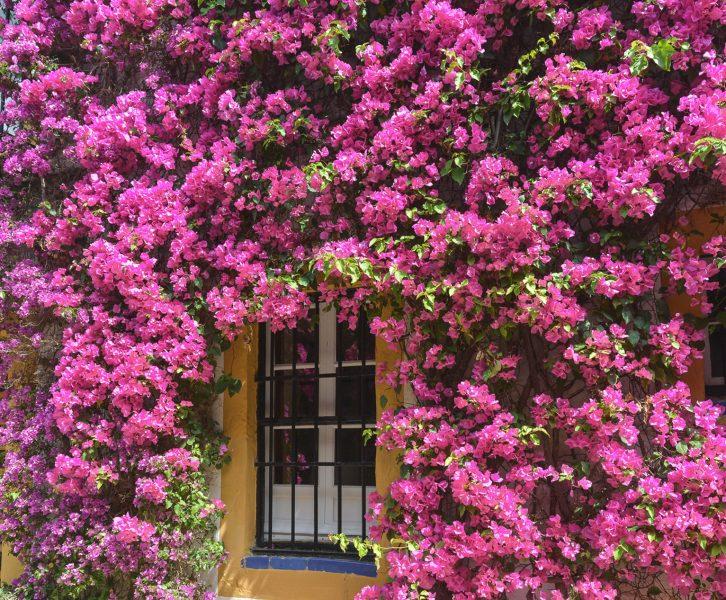 Sevilha é um dos nossos destinos de Primavera favoritos pelas cores que se espalham pela cidade