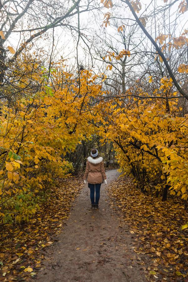 Outono no Vondelpark em Amesterdão