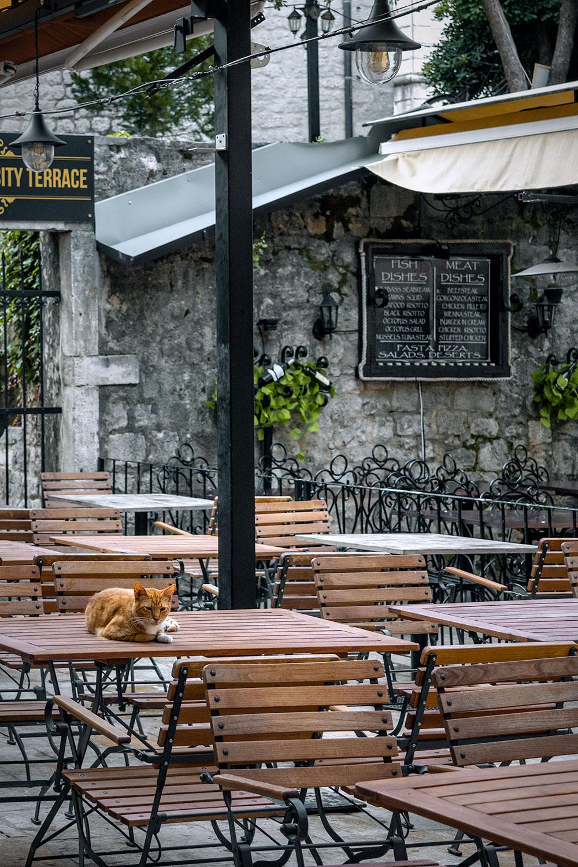 Um gato alaranjado ocupa uma das mesas do centro histórico de Kotor antes da chegada dos turistas