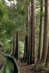 As levadas na Madeira destacam-se por seguirem cursos de água