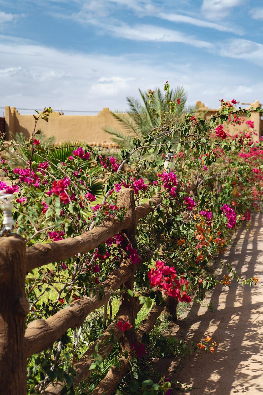 Coloridas flores no roteiro para o deserto em Marrocos