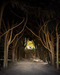 Tem de visitar os jardins da Casa de Mateus quando estiver no Douro