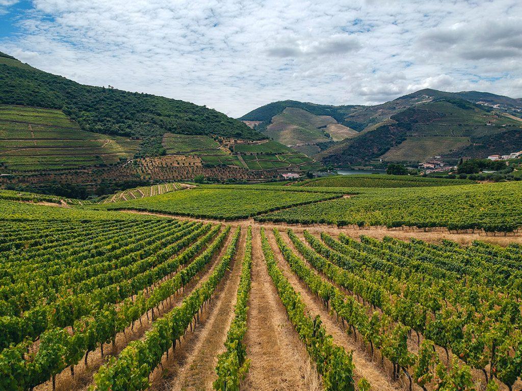 Paisagem de vinhas sem fim no Vale do Douro